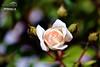 Flor 015