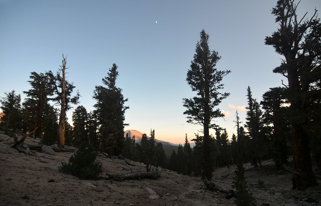 Alpine glow on the timberline forest