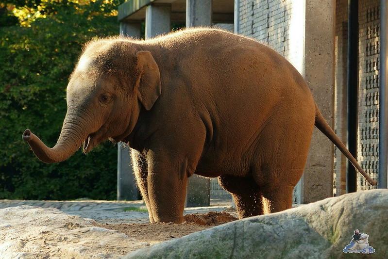 Berliner Zoo 8