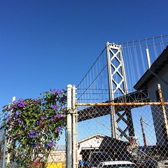 Bay Bridge Bougainvillea. #sanfrancisco #nofilter