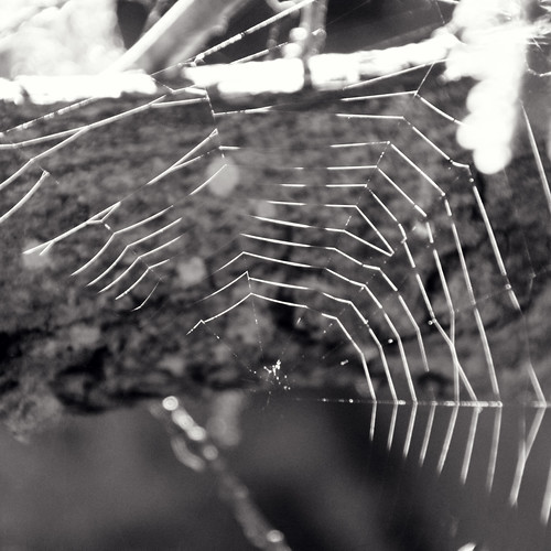 Life 's a spider web