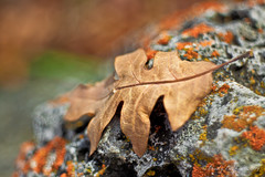 Leaf On Moss Covered Stone