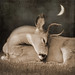 Goodnight Deer (Explore 10/24/14) by sally banfill