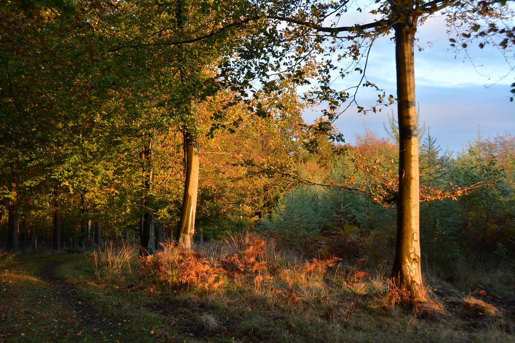 Autumn in the Forest of Dean