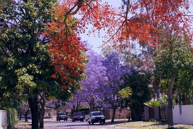 Spring colour in Brisbane