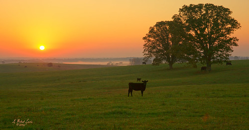 morning trees mist green nature field fog sunrise landscape dawn midwest scenery cattle farm missouri calf ozarks dentcounty