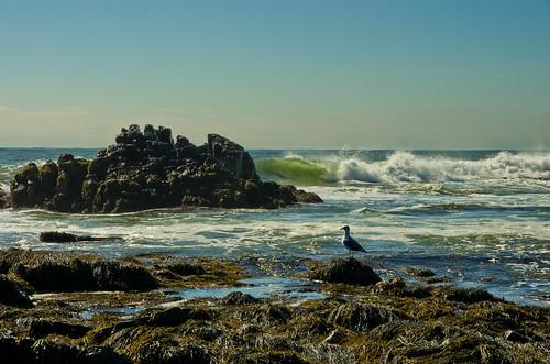autumn seascape rocks waves gull maine coastal kennebunk