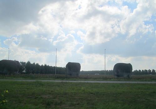 landscape  elephants