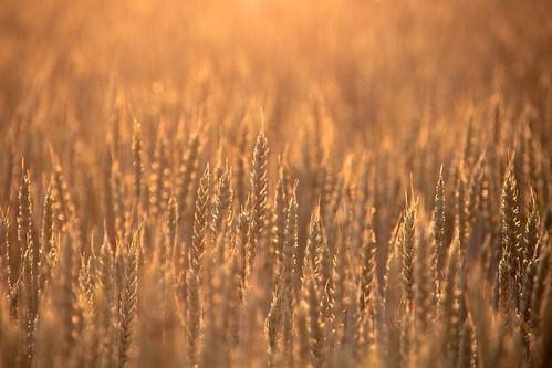 morning summer mist nature beautiful field misty fog sunrise suomi finland dawn countryside finnland country foggy crop what finlandia フィンランド finlande finlândia finnország finlanda finlàndia финляндия finnishsummer finnlando فنلندا