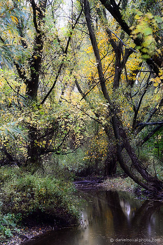 park morning autumn ny newyork reflection green fall nature water colors rain yellow creek outdoors buffalo woods mood chaos order birdsong hike trail jungle swamp marsh subtle 2014 orchardpark