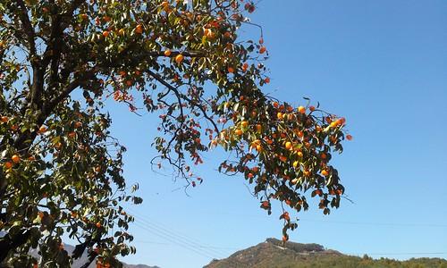 시골집풍경 | 가을