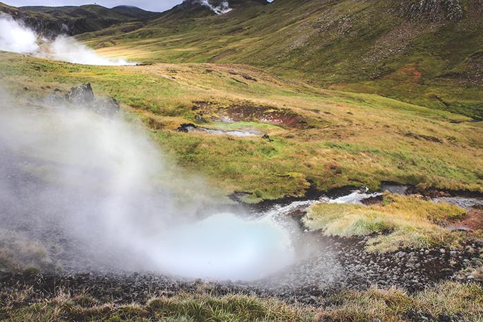 Iceland_Spiegeleule_August2014 113