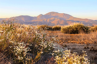 Wild grasses near Temecula | by Karol Franks