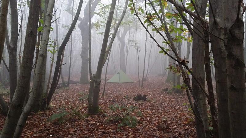 Hexpeak in the woods