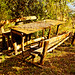 Table in the wood by lotti roberto