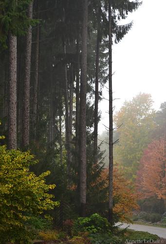 trees nature fog clarkstonmi photoannetteleduff annetteleduff 10132014 october132014