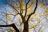 Die letzten Blätter   Nikon D600 by Thorsten Holland