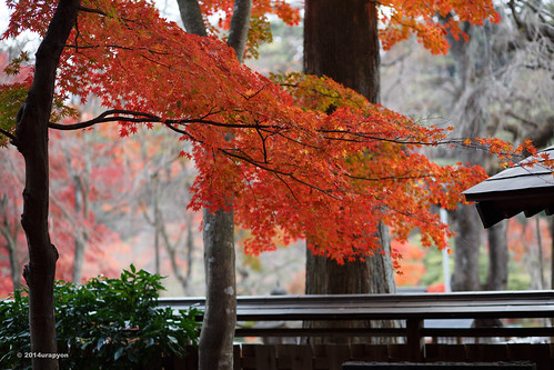 autumn red orange color tree japan canon landscape maple autumnleaves 日本 紅葉 秋 神社 fukushima mapleleaves mapletrees 2014 coloredleaves 福島 福島県 ef85mmf18usm 85f18 eos6d 白河市