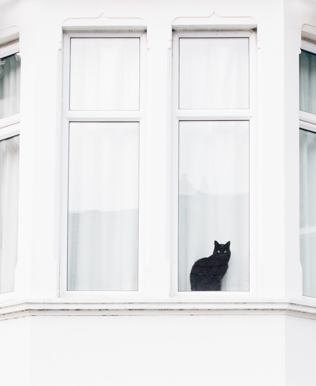 black cat in window