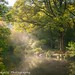 Hannicombe Wood, Dartmoor by Simon Hodgkiss Photography