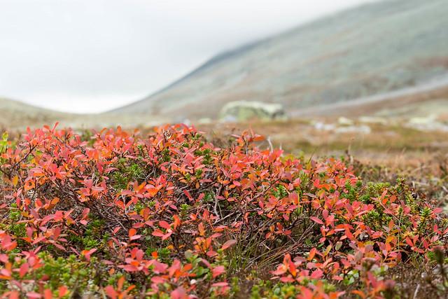 Efterårsfarver i Illmanndalen