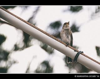 Like a bird on the wire/Come un uccello sul filo