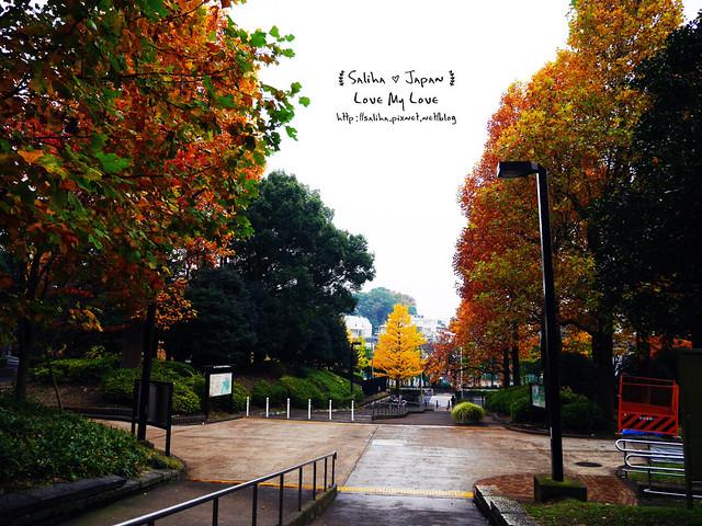 日本東京景點澀谷區代代木公園賞楓葉 (6)