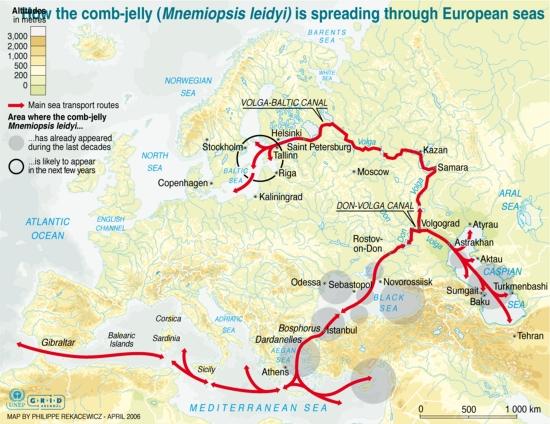 how the comb jelly mnemiopsis leidyi is spreading through european seas invasive species