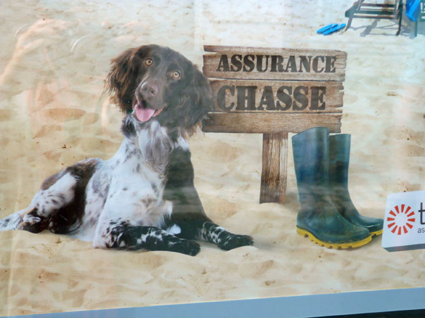 assurance chasse