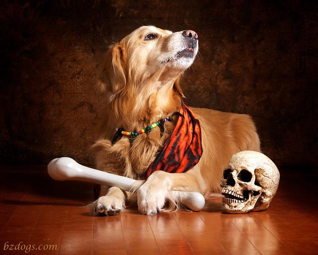 Cave Dog