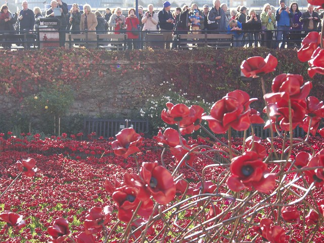 Tower of London, Blood Swept Lands and Seas of Red, London, travel, England, ceramic, poppies, moat