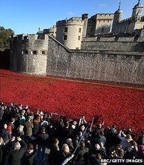 Crowds viewing poppies at Tower of London