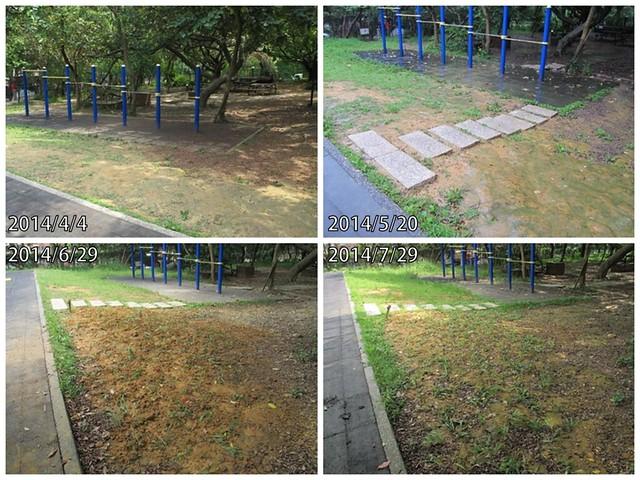 遊樂場溜滑梯與單槓之間的草皮。