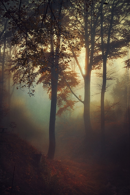Dyrk.Wyst - fog pit