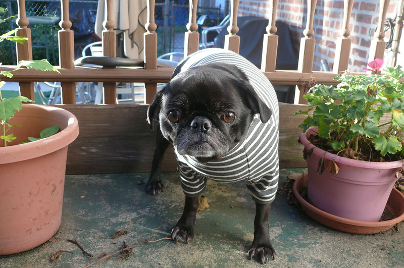 Milla Milla Dog Hoodie & Sweatshirt | Ginger Maes