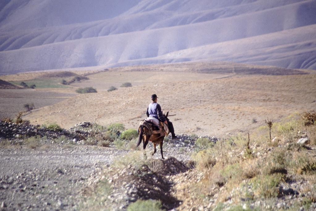 Road trip en Iran - A dos de mule