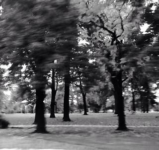 Tower Grove Park Saint Louis