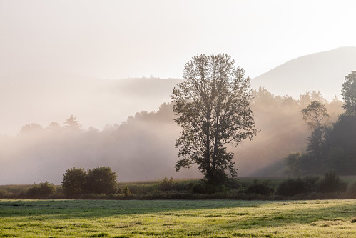 field fog foggy grass morning mountains sunbeam sunrise tree vermont vt waitsfield unitedstates