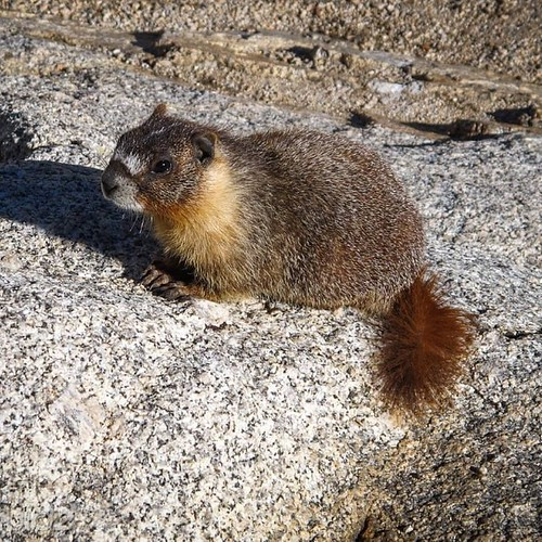 And now...a marmot.