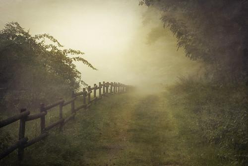 mist lines misty sunrise fence germany forrest path fineart warmlight hesse konradzuse hünfeld caughtinpixels jacobsurland realismdigitalart