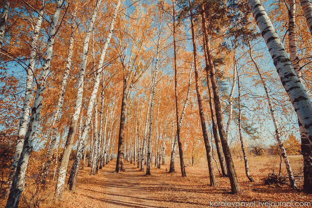 Autumn-003