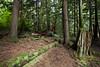 Northwest trails