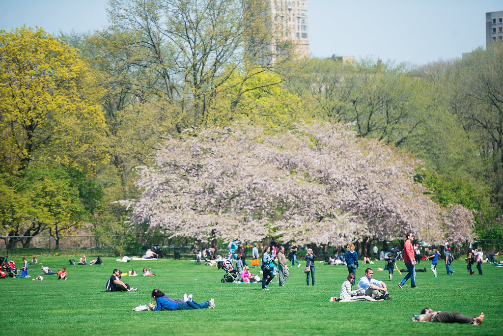 Central Park Green