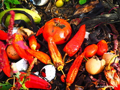 The last peppers and tomatoes - Fall Along Spring Creek