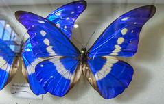 Expoterraria 2014 - Mariposa