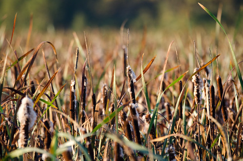travel field washington nikon sigma wa wildliferefuge ridgefield ridgefieldnationalwildliferefuge d7000 nikond7000 120400mmf4556afapodgoshsm