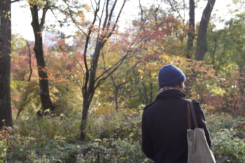central park in fall | reading my tea leaves