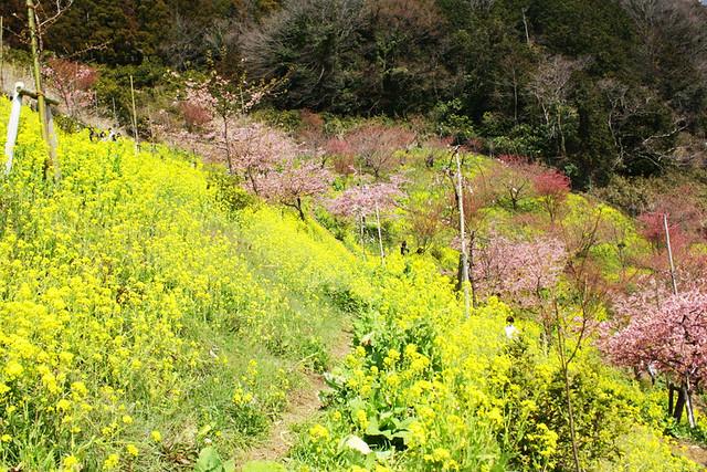 2014-03-16_00100_高松山