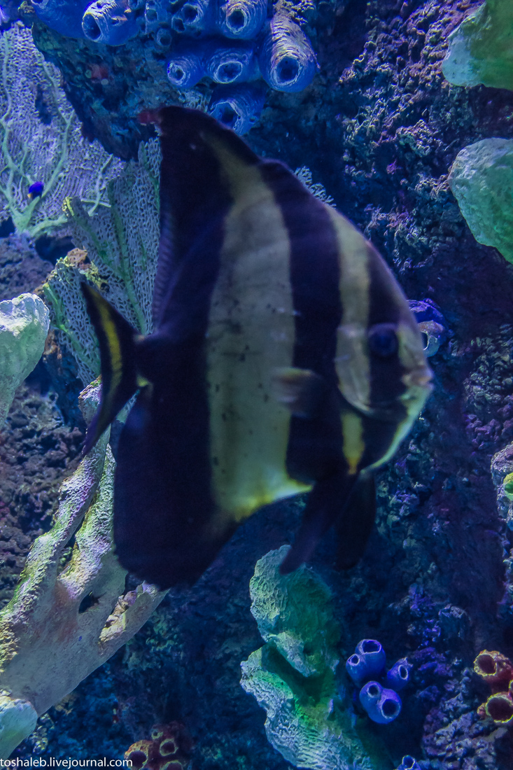 Анталья_аквариум-9
