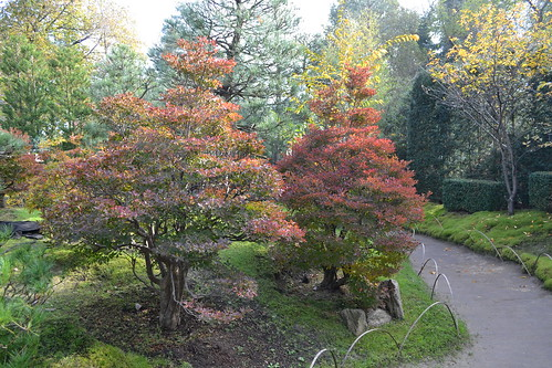 Bonsaigarten Ferch Herbst 2014